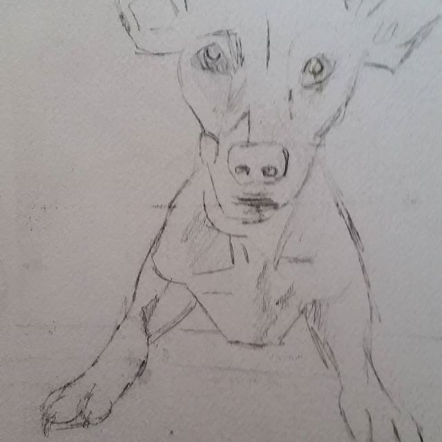 <p>I&#8217;m currently working on a portrait of Paca, a sweet and playful rescue. Paca is a mixed breed dog with big ears and a soulful expression. She is very curious and loves to explore. &nbsp;</p>